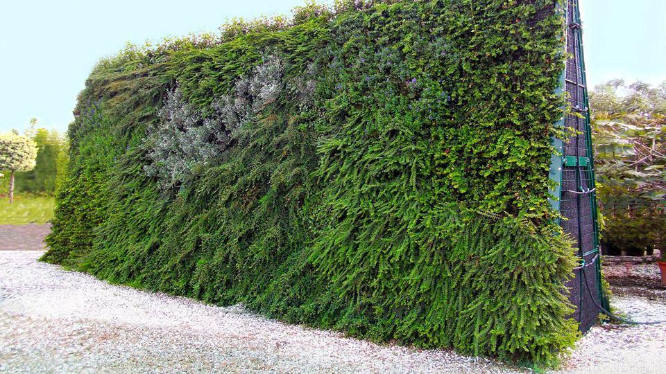 Barriere a verde verticale fonoisolanti e fonoassorbenti