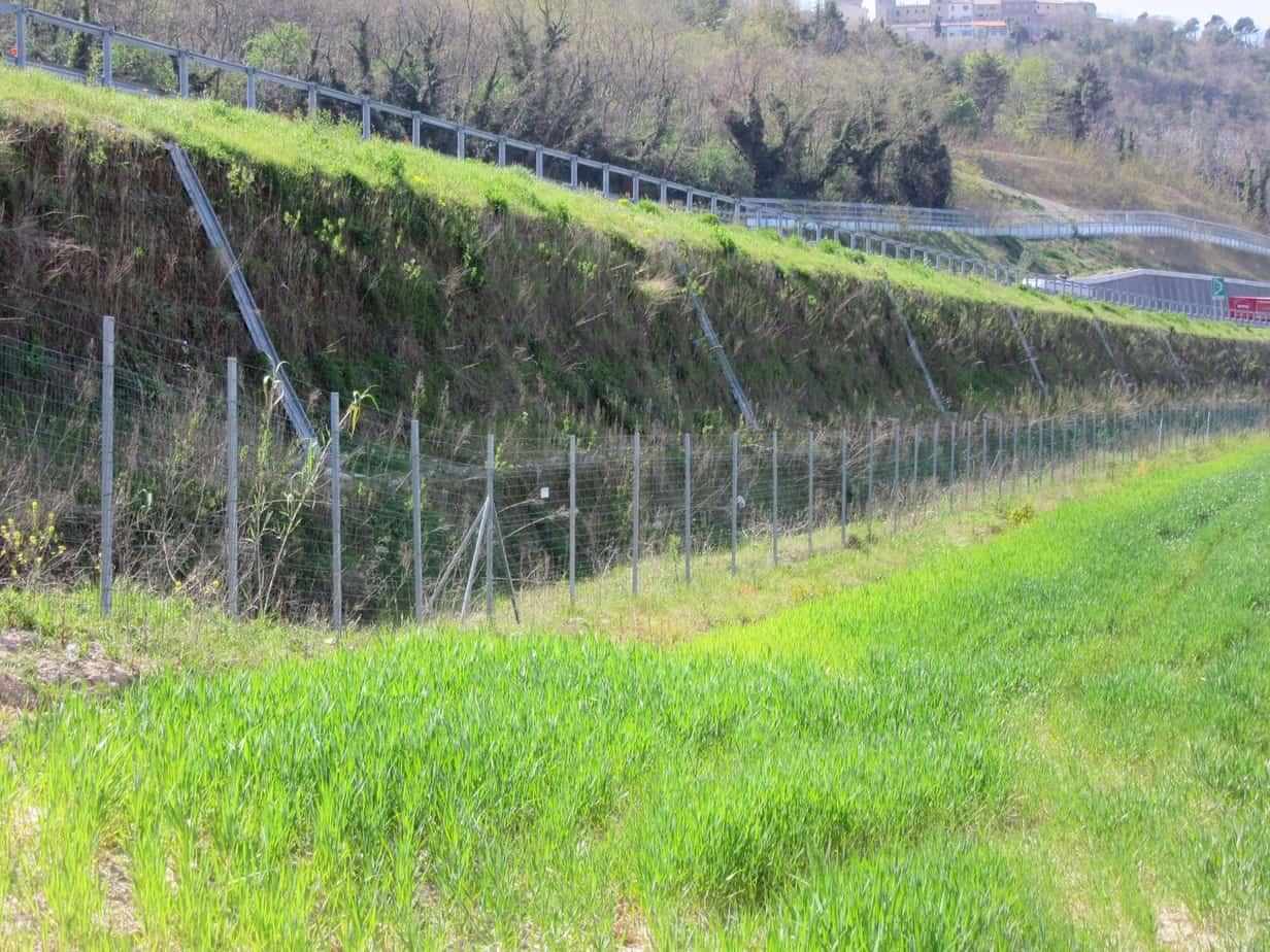 Vista dell'opera a vegetazione sviluppata