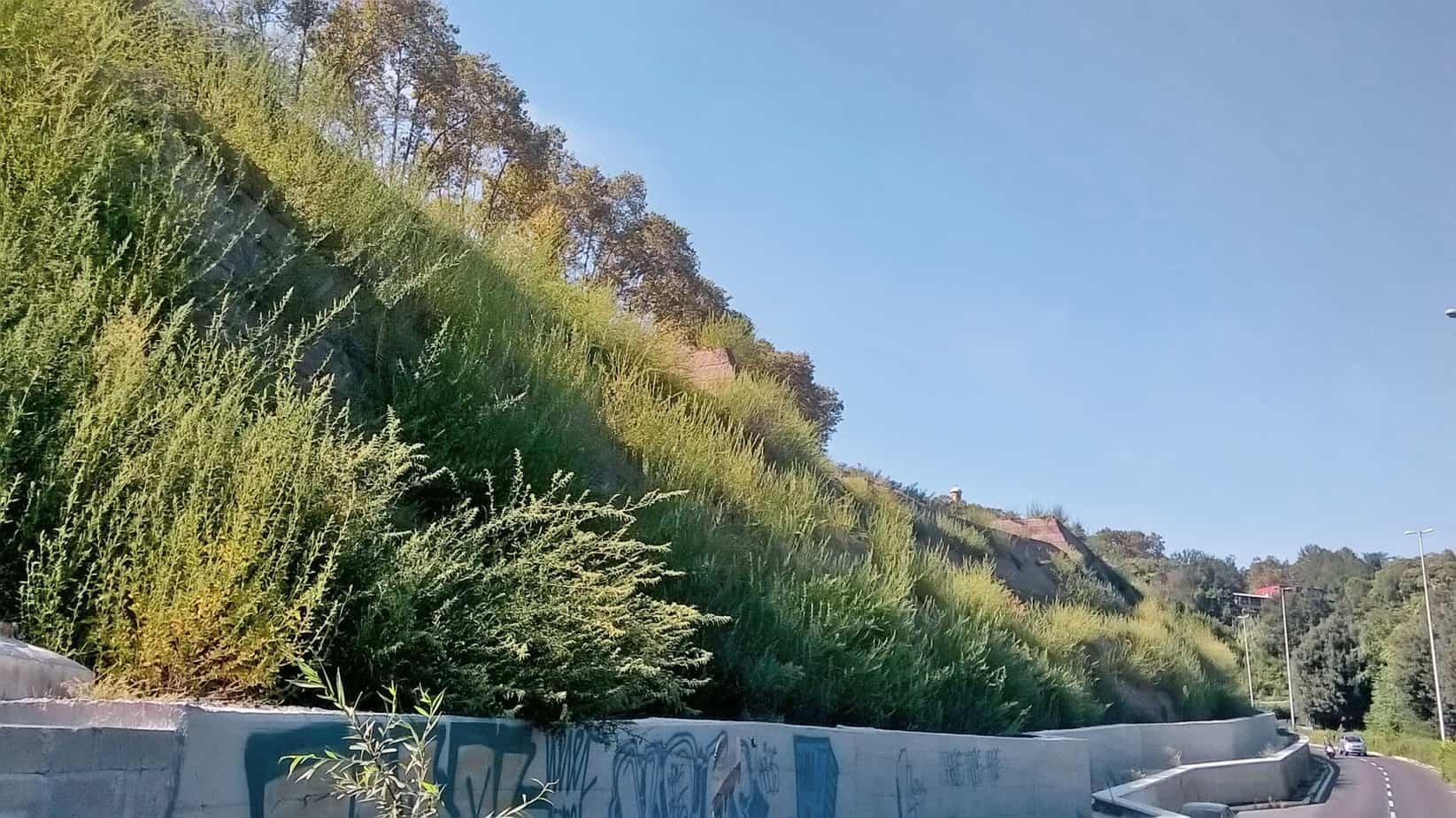Vista dell'opera ricoperta di vegetazione a quattro mesi dal completamento 7 Giugno 2015 dei lavori