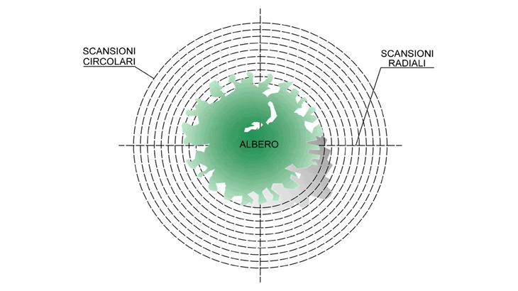 Lo schema planimetricodi test concentrici attorno a un fusto d'albero
