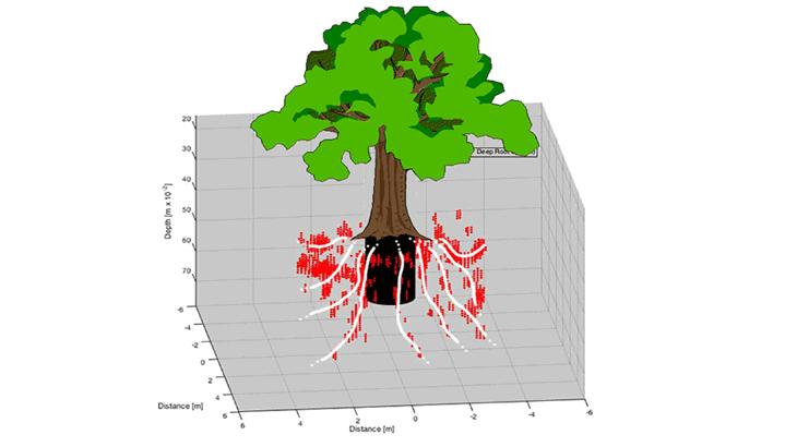 La ricostruzione tridimensionale dell'impianto radicale superficiale